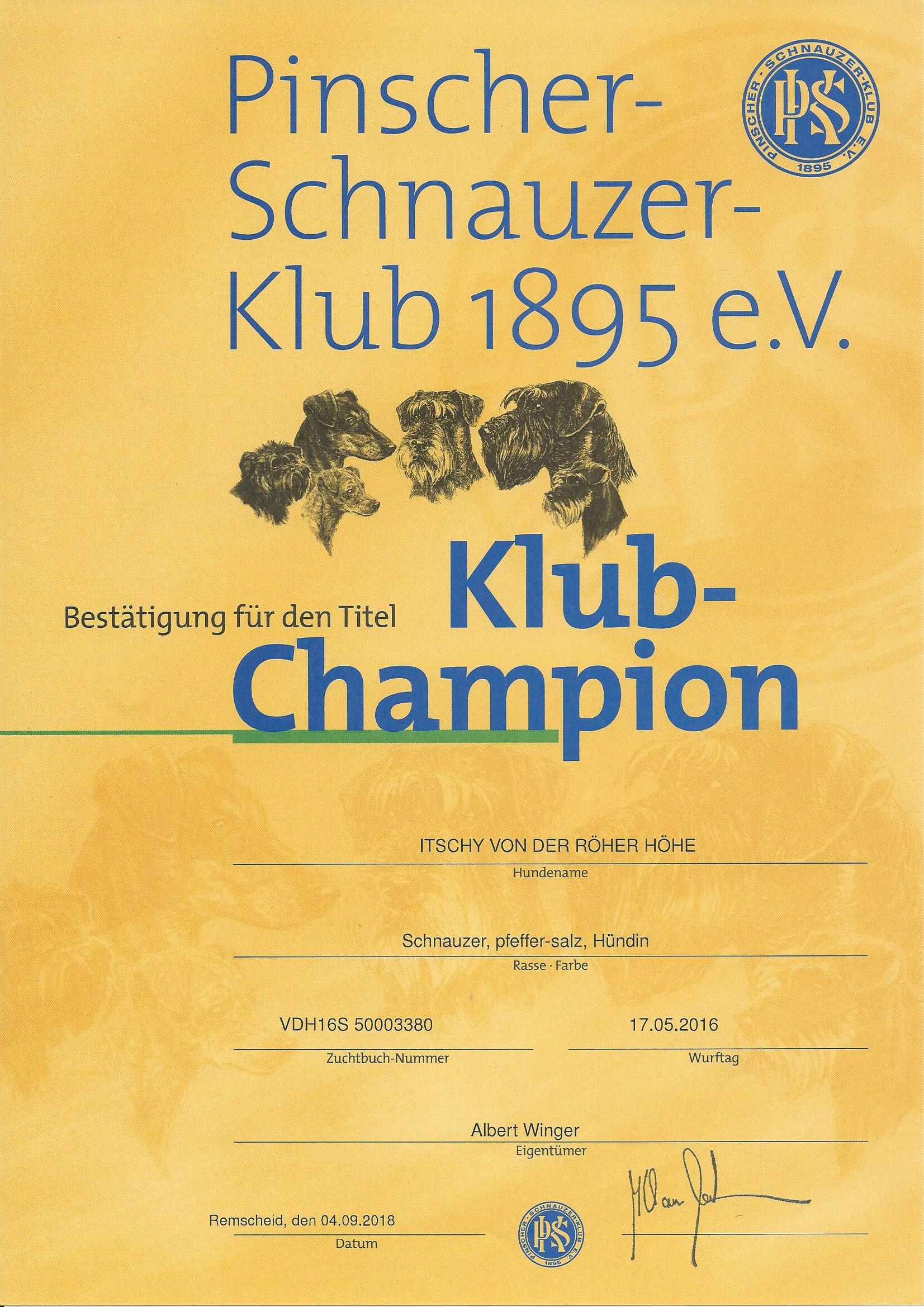 Schnauzer Klub PSK Klub Champion 2018