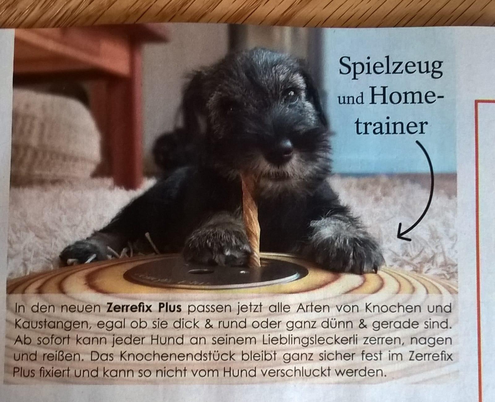 Jule , Werbung in der Hunde Welt April 2019